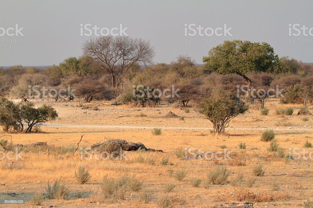 The savannah in the Etosha National Park in Namibia stock photo