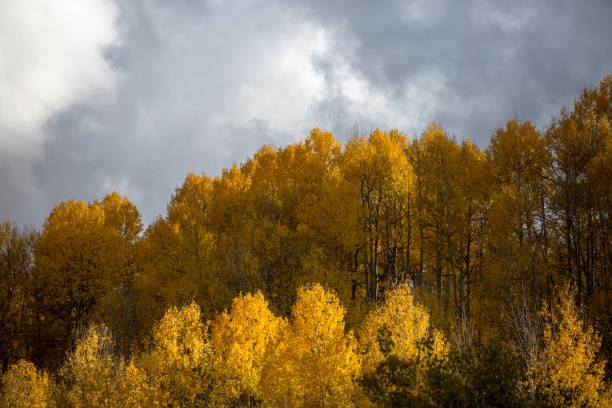 The Scenic of yellow Aspen stock photo