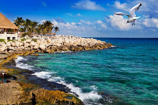 The sea coast in park near Cozumel, Mexico