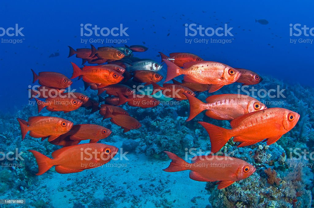 The sea is red stock photo