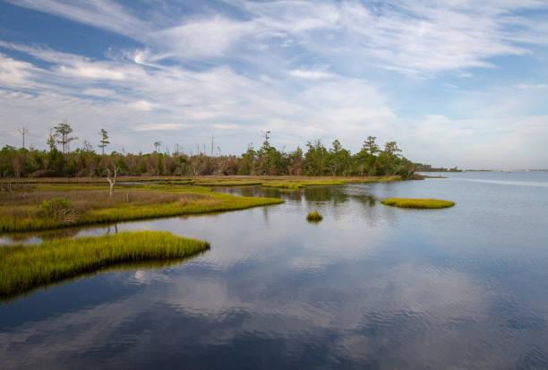 the sea meets the river on a beautiful quiet morning in a swamp wetland landscape. - estuário imagens e fotografias de stock