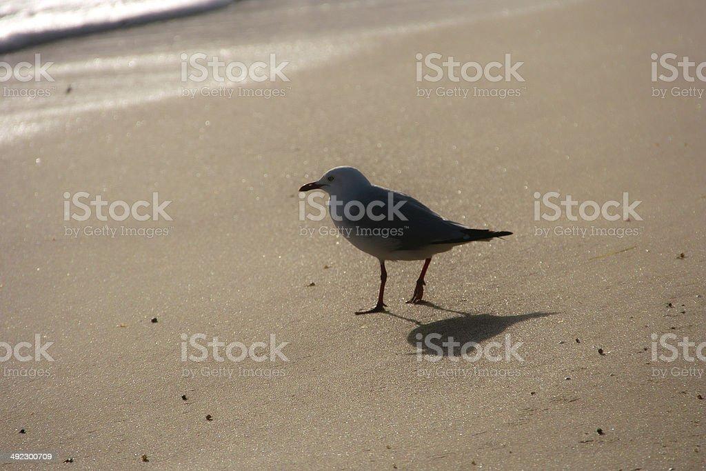 The seagull on the beach stock photo