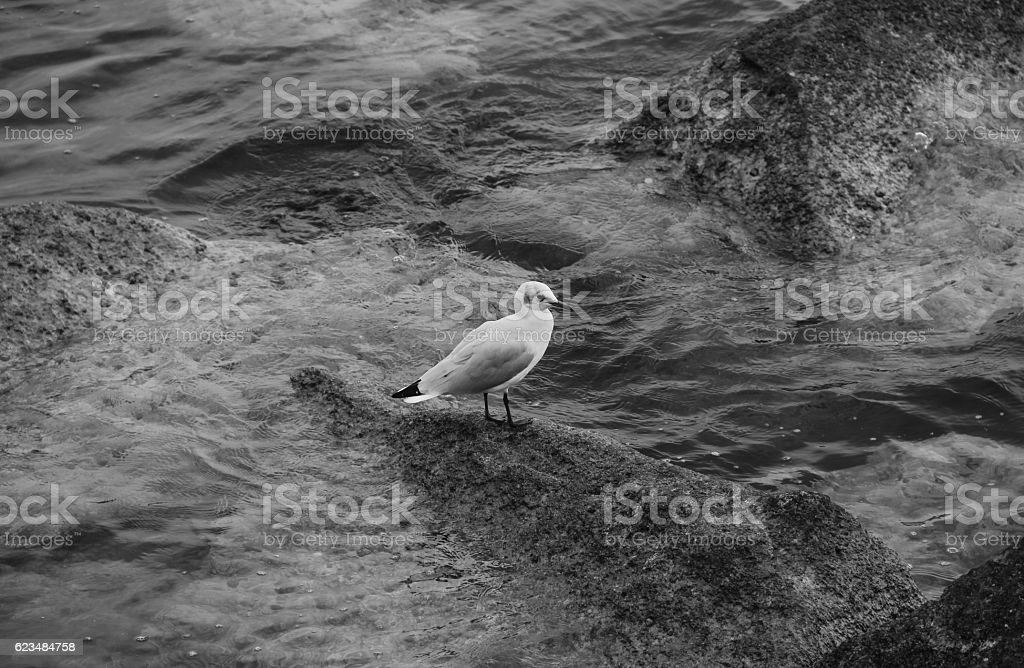 The seagull stock photo
