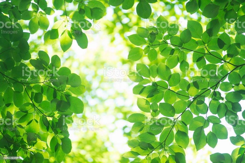 The season of the fresh green.Trees in the forest. - foto de stock