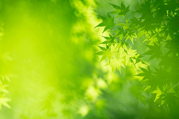 the season of the fresh green.trees in the forest. - kelly green stock pictures, royalty-free photos & images