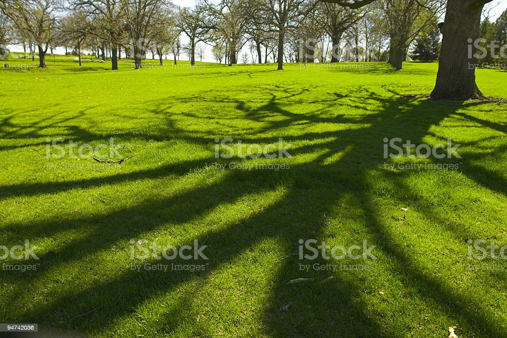 The shadow of a tree on the lawn on a beautiful afternoon  stock photo