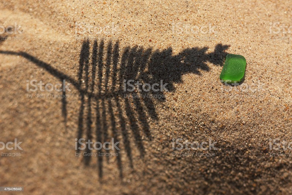 The shadow of the plant on yellow sand beach stock photo