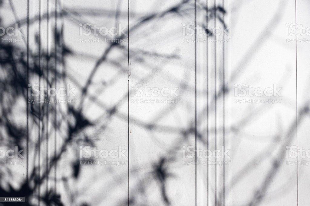 壁に落ちた植物の影 ストックフォト