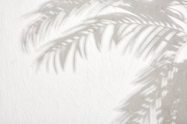 The shadows of the leaves on a white plastered wall stock photo Gray shadow of the leaves on a white wall. Abstract neutral nature concept background. Space for text. shadow stock pictures, royalty-free photos & images