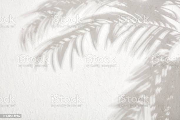 Photo of The shadows of the leaves on a white plastered wall stock photo