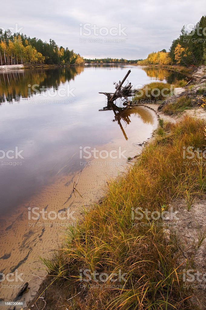 The shallow river. royalty-free stock photo
