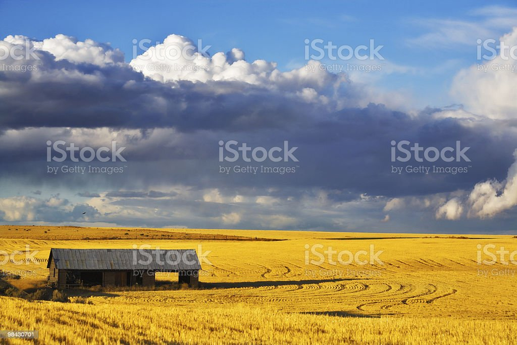 The shed in field after harvesting royalty-free stock photo
