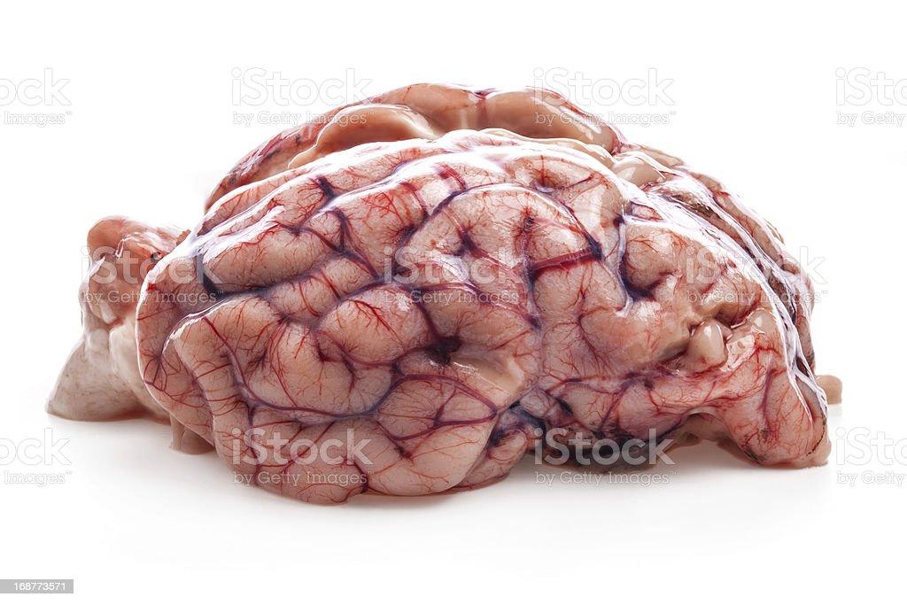 Fotografía de Las Ovejas Del Cerebro y más banco de imágenes de ...