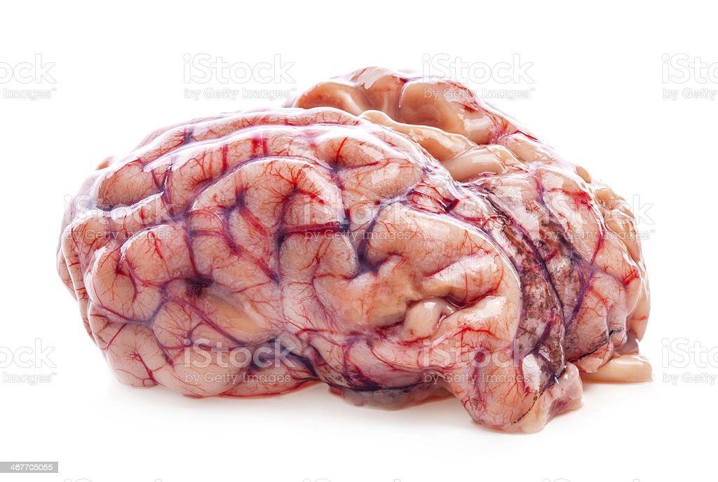 The sheep's brain stock photo