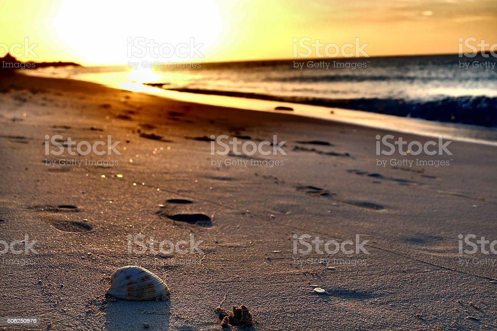 The Shell stock photo