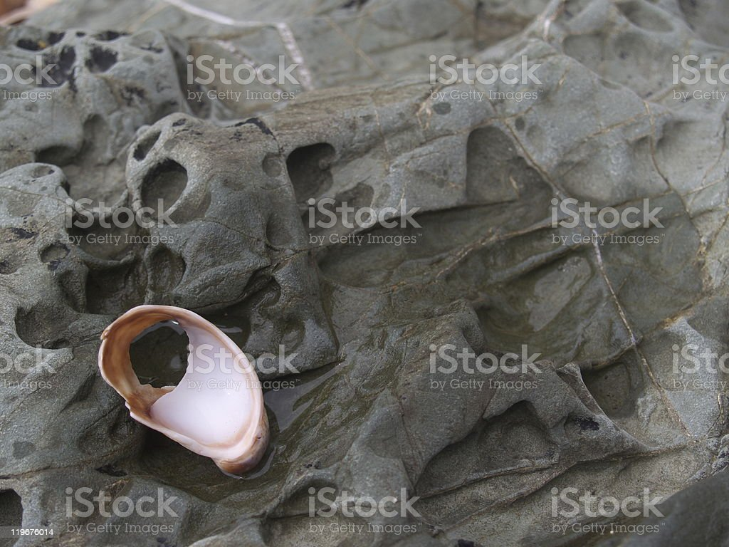 The shell pierced royalty-free stock photo