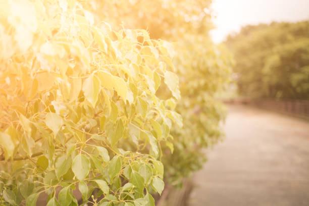 輝くツリー。 ストックフォト