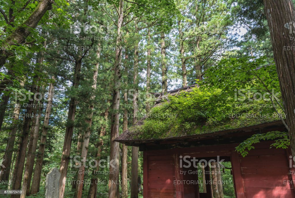 The Shinto gate in forest stock photo