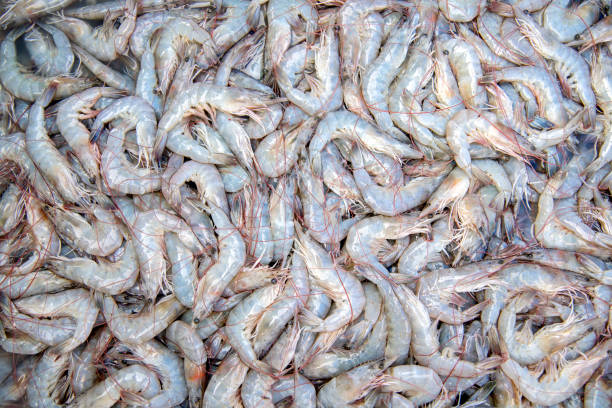 The shrimp used to Cook The shrimp used to Cook several delicious and there are benefits to the body invertebrate stock pictures, royalty-free photos & images