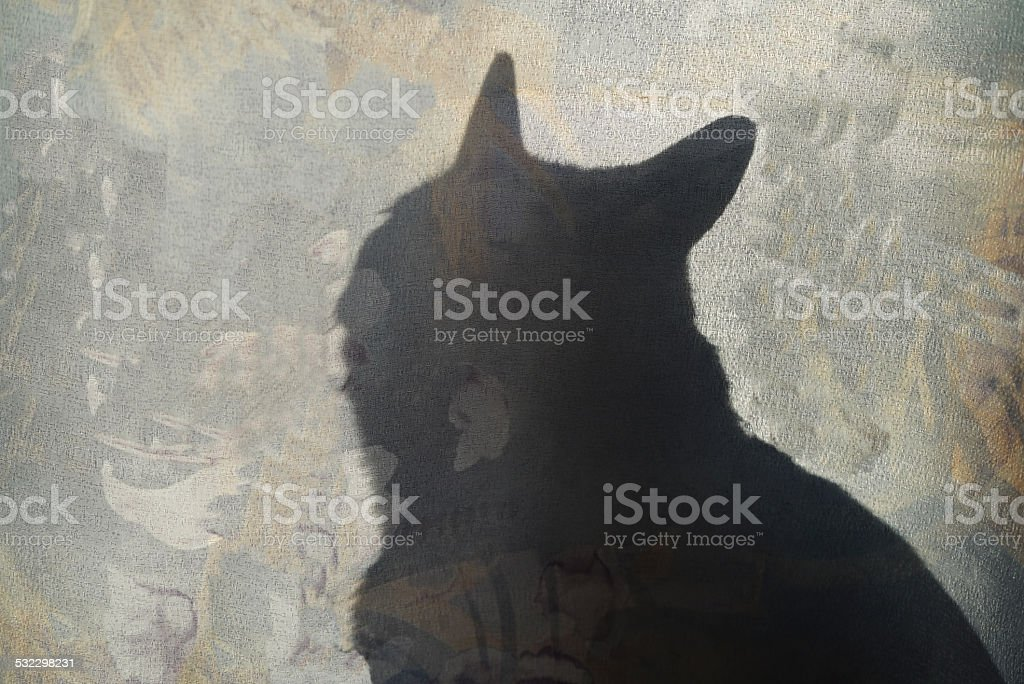 The Silhouette Of A Cat stock photo