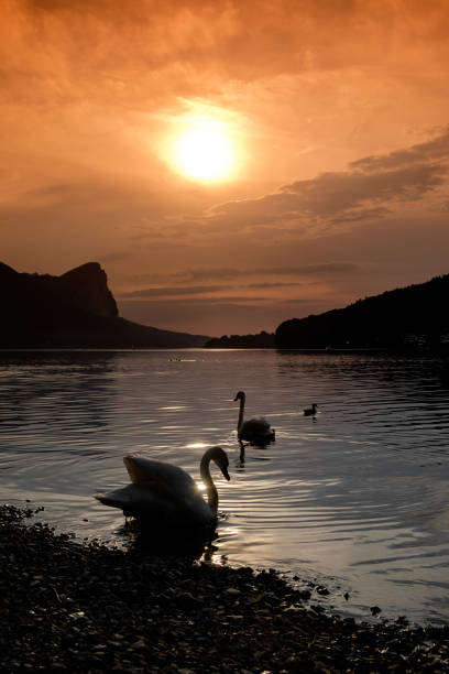 Die Silhouette der beiden Schwäne auf einem See vor Sonnenuntergang an einem See in Österreich mit dem Berg Blomberg und der Drachenwand im Hintergrund. – Foto