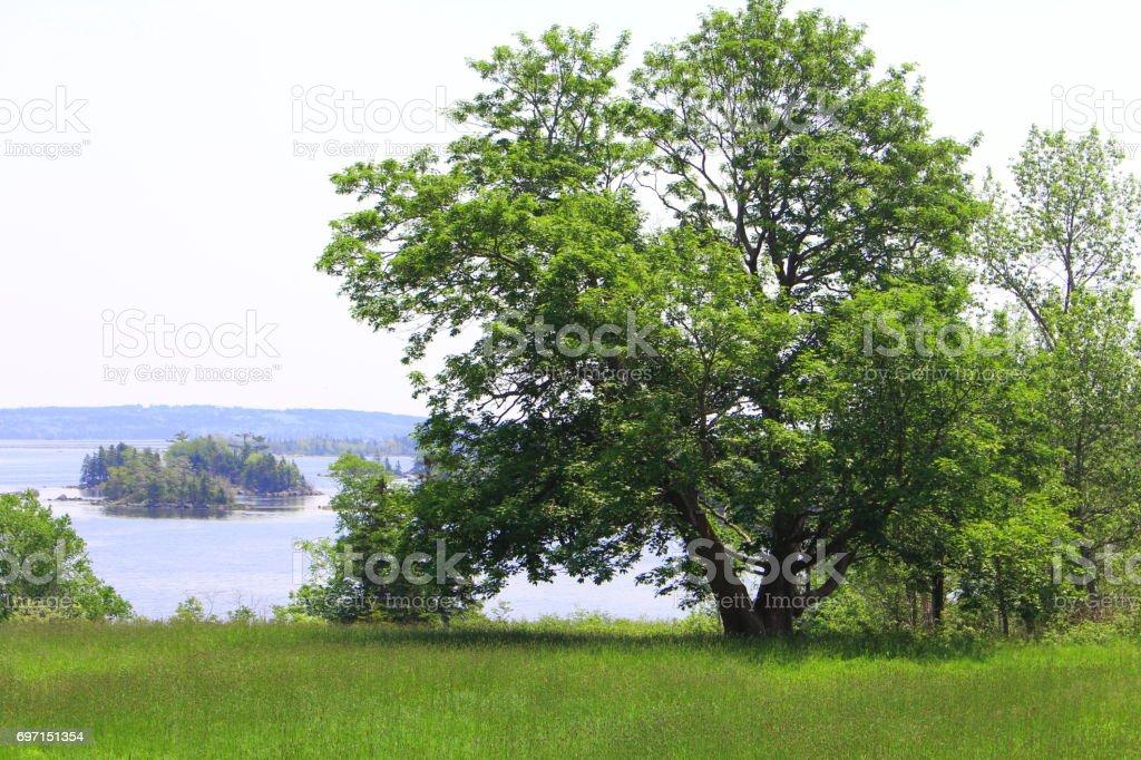 The Sitting Tree stock photo