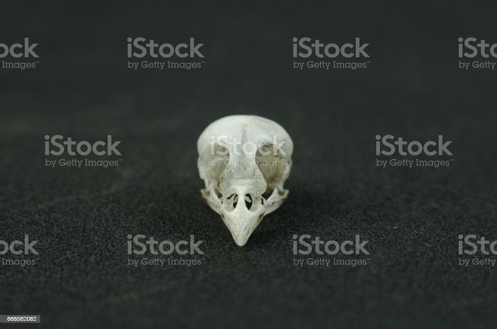 The Skull Of The Bird On A Black Background Stock Photo & More ...