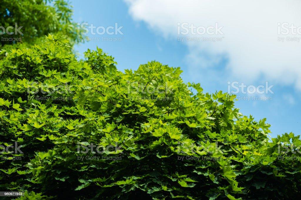 der Himmel über den Bäumen im Wald - Lizenzfrei Anhöhe Stock-Foto