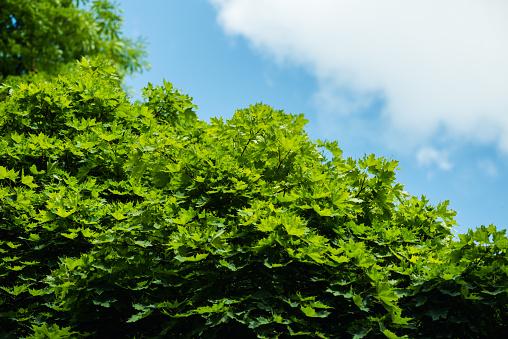 Der Himmel Über Den Bäumen Im Wald Stockfoto und mehr Bilder von Anhöhe