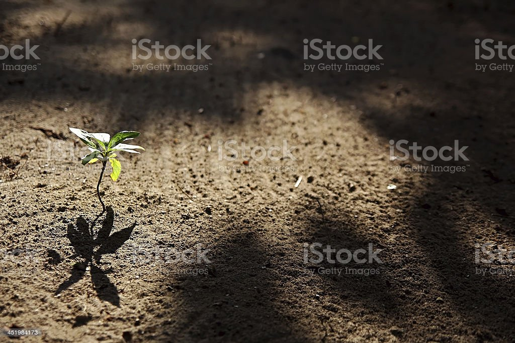 the small plant stock photo