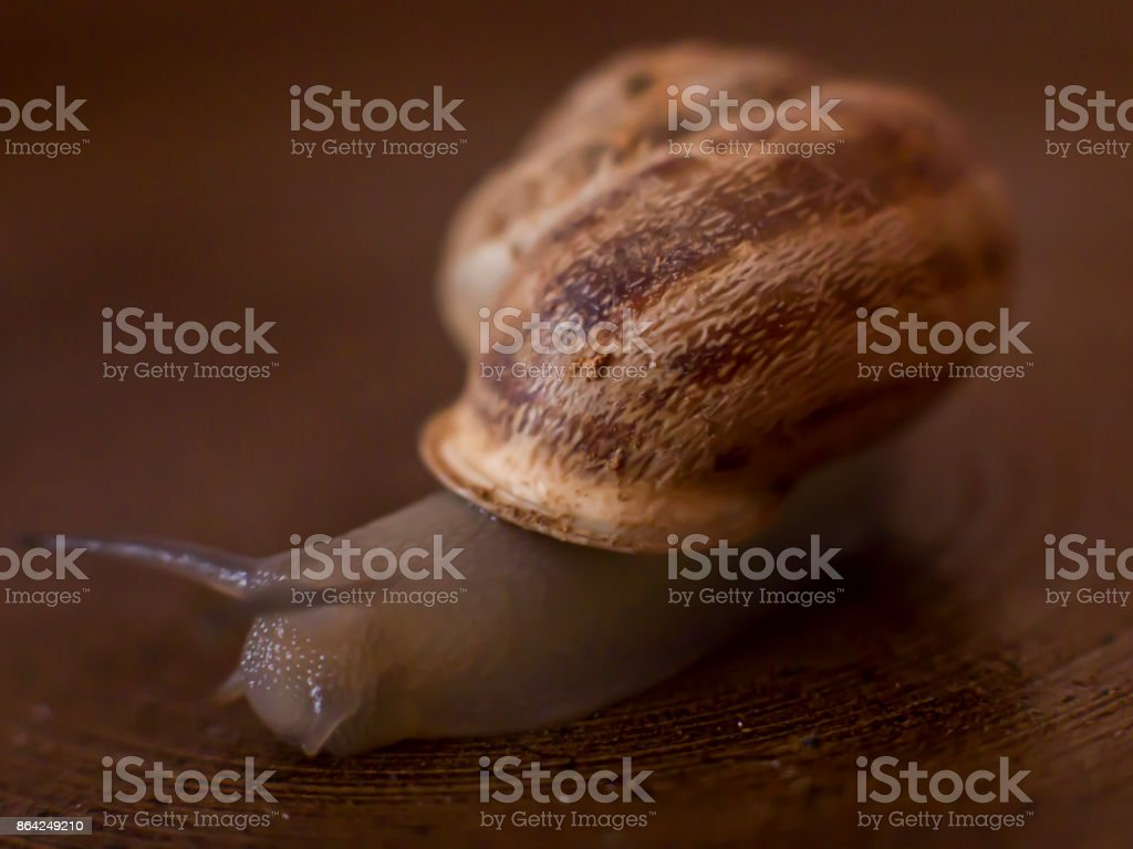 The snail crawls in the wooden box royalty-free stock photo