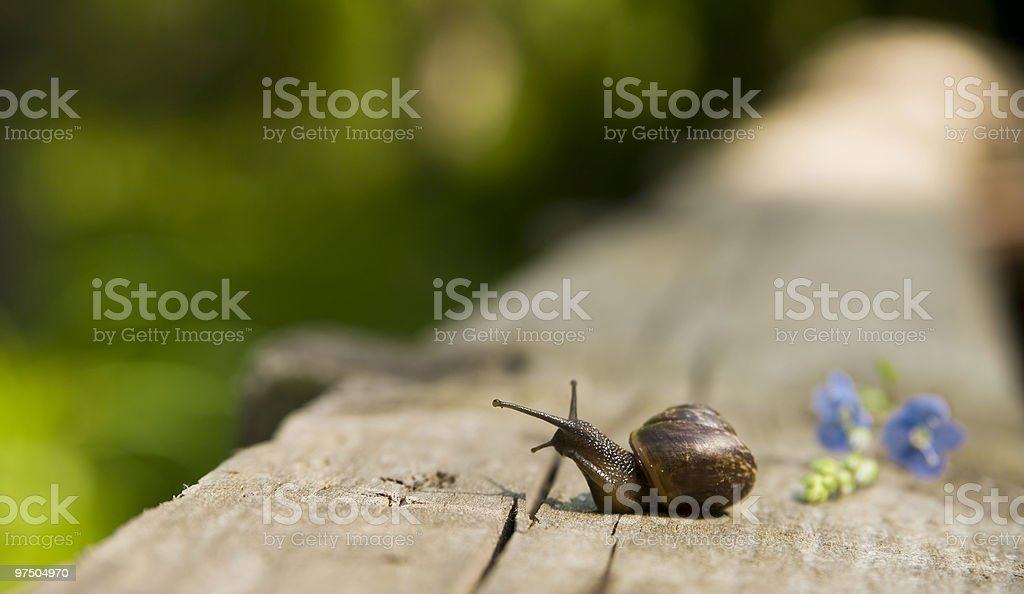 The snail creeps on an old board royalty-free stock photo