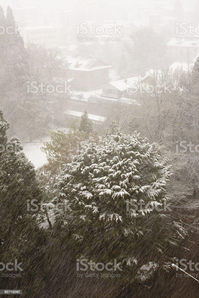 The snow royalty-free stock photo