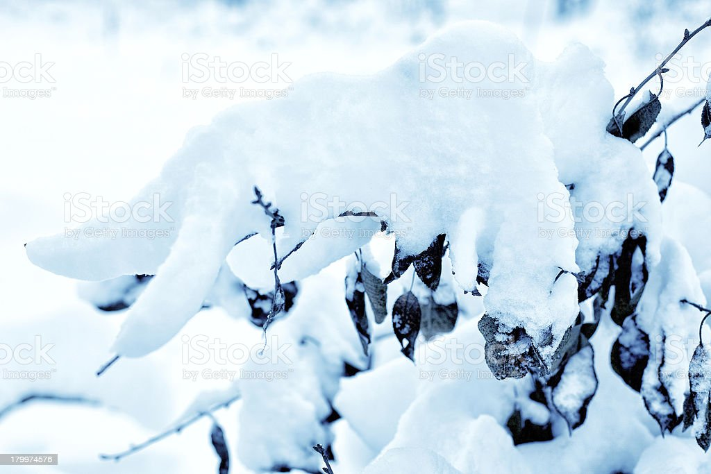 The snow-covered forest. royalty-free stock photo