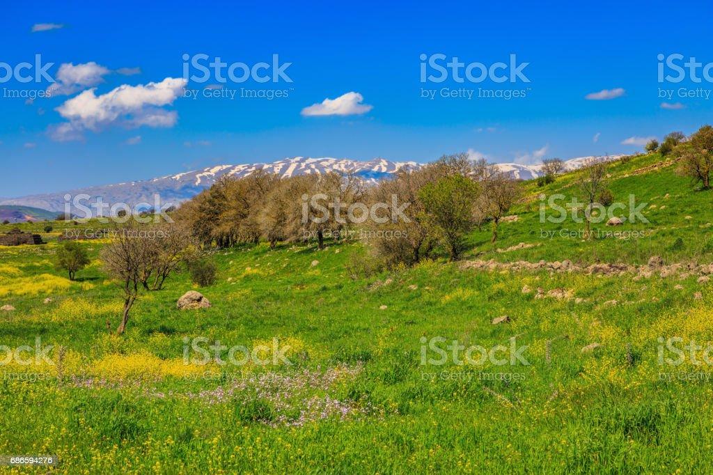 The snowy peak of Mount Hermon stock photo
