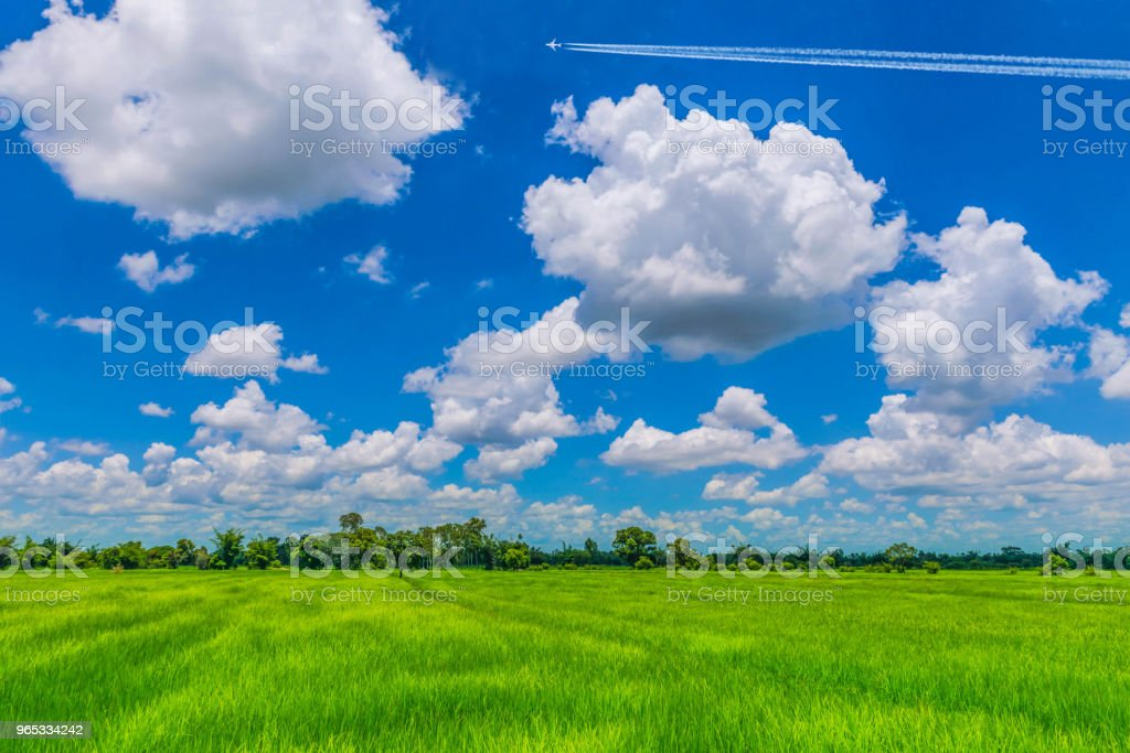 The soft focus of green paddy rice field, the wonderful beautiful sky, and cloud.The country lifestyle in Thailand. zbiór zdjęć royalty-free