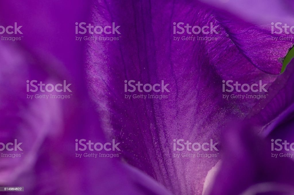 The softest of purple stock photo