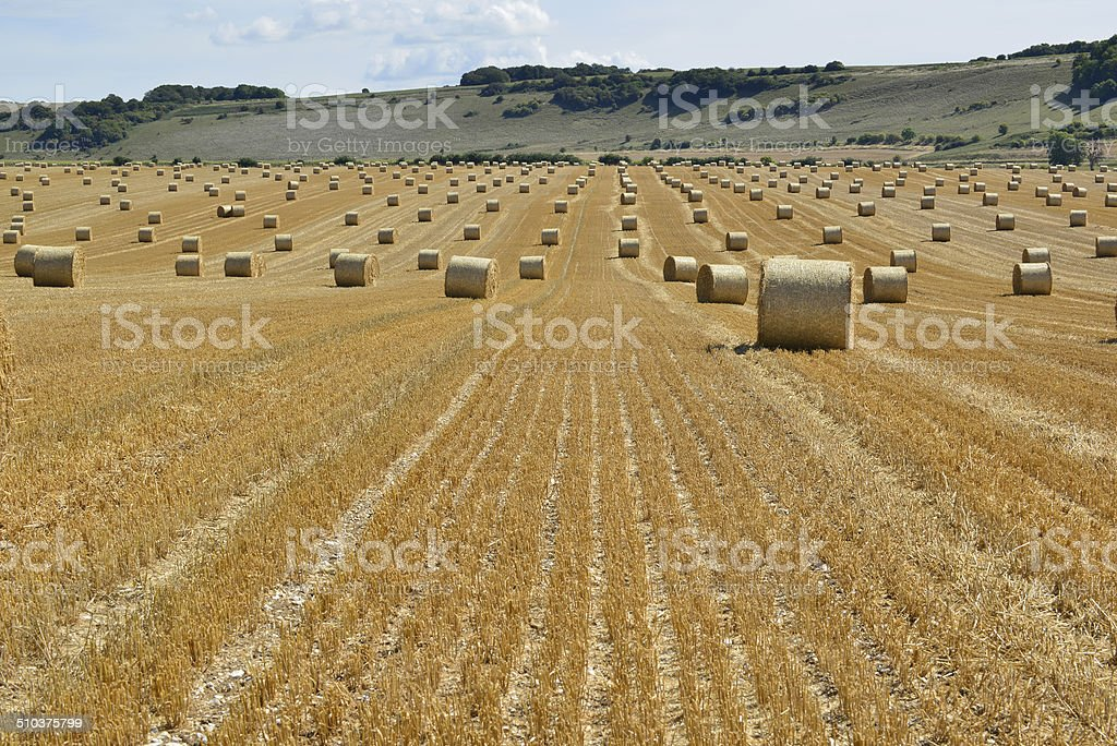 The South Downs and Rolls of Straw stock photo