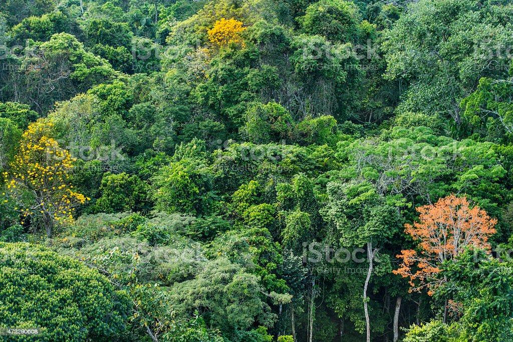 Do Sul acima da copa das árvores da floresta tropical amazônica - foto de acervo