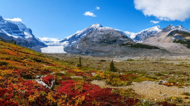 壮大なパノラマ、劇的な山の地形や高山植物の秋の色を与えるに沿ってコロンビア氷原のアサバスカ氷河天美 - ツンドラ ストックフォトと画像