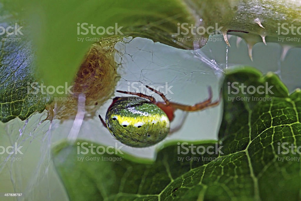 The spin lays eggs stock photo