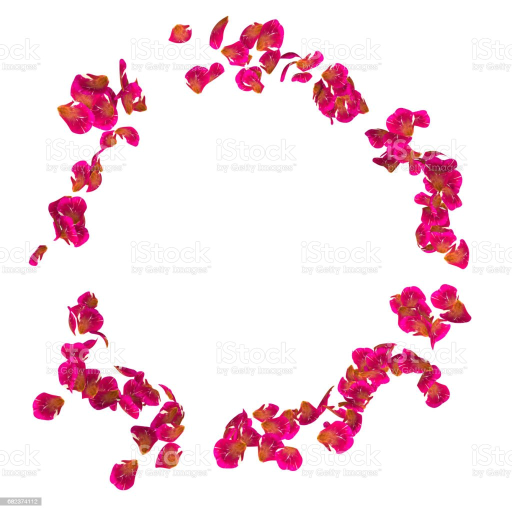 The spotted petals of roses are flying in a circle foto stock royalty-free