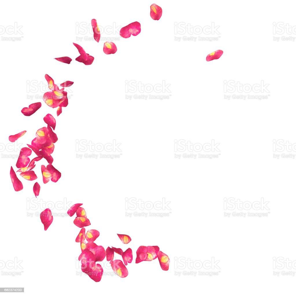 The spotted petals of roses are flying in a circle royaltyfri bildbanksbilder