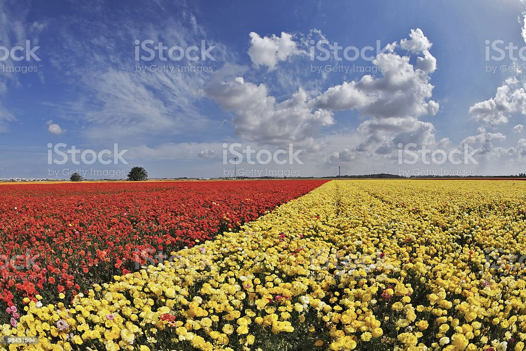 The spring day in fields flowers royalty-free stock photo
