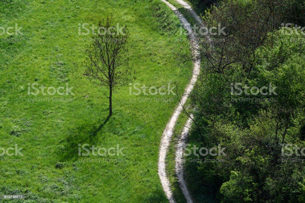 The spring forest - Arsiè, Belluno, Italy - foto stock