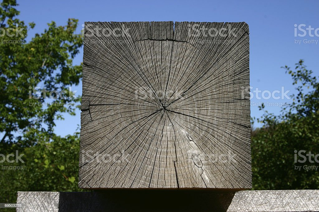 The Square tree royalty-free stock photo