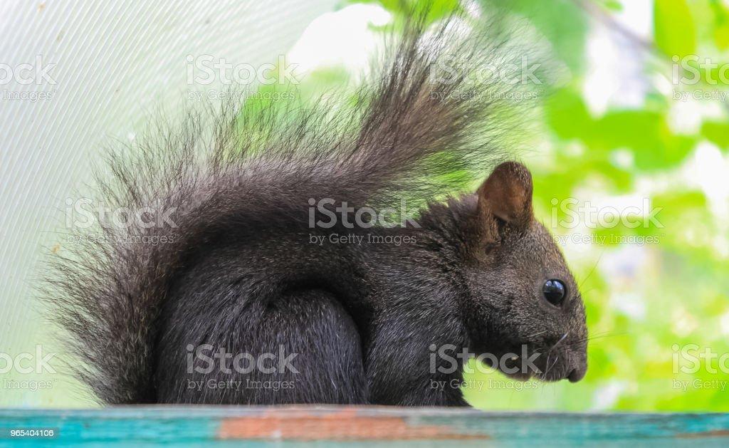 다람쥐는 나무에 중단 구 유에 견과류에 피드 - 로열티 프리 0명 스톡 사진