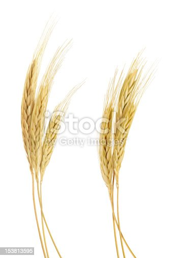 istock The stand golden barley on white background 153813595
