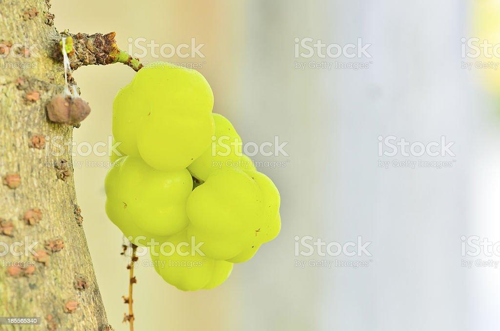 The star gooseberry on tree royalty-free stock photo