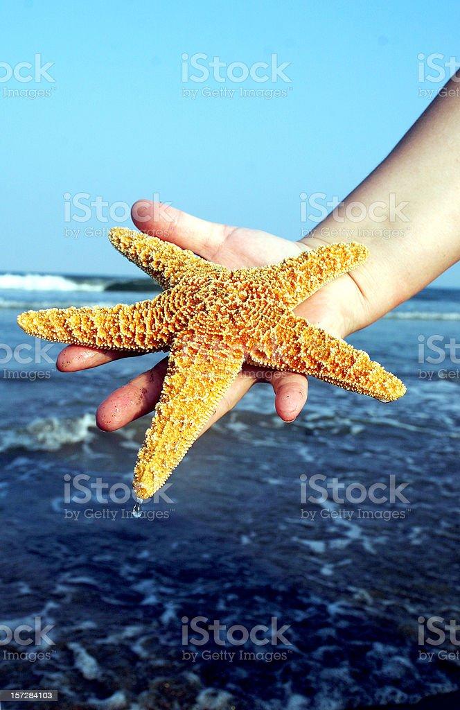 Der Star. – Foto